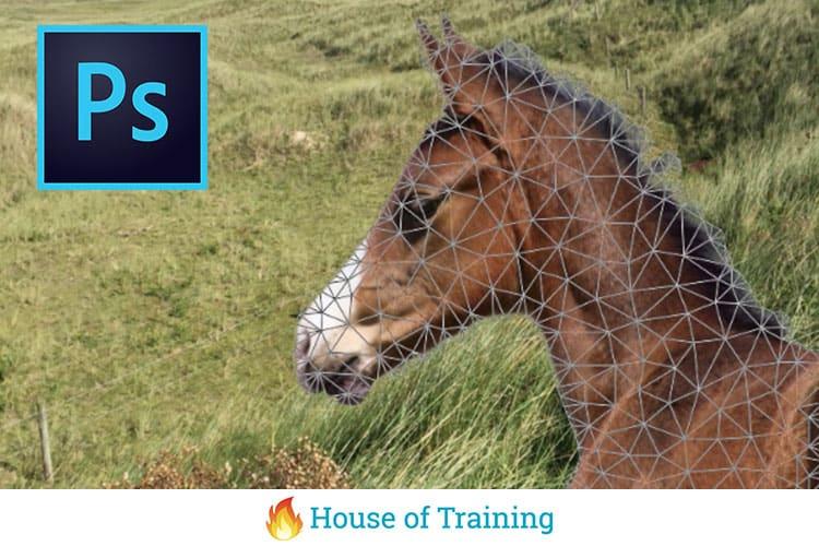 In deze online cursus leer je het selecteren en transformeren van elementen in Photoshop CC