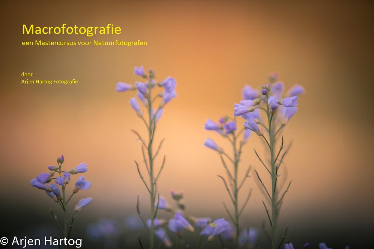 In de online cursus Macrofotografie leer je prachtige dichtbij foto's maken van dieren en natuur